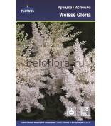 Астильба Weisse Gloria /2