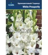 Гладиолус White Prosperity 12-14 /7