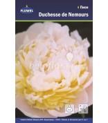 Пион Duchesse de Nemours /1