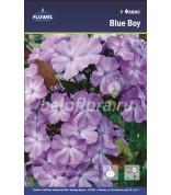 Флокс Blue Boy /2