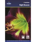 Лилейник Night Beacon /1