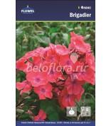 Флокс Brigadier /2