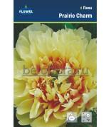 Пион Prairie Charm ИТО гибрид (2/3) /1