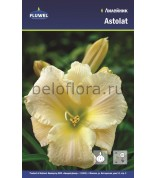 Лилейник Astolat /1