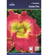Лилейник Crown Fire /1