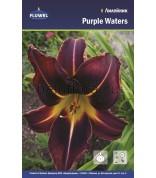 Лилейник Purple Waters /2