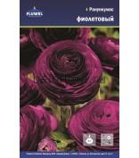 Ранункулюс Purple 6/7 Флюв. /10