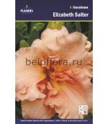 Лилейник Elizabeth Salter /1