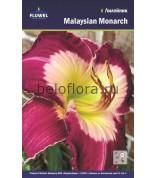 Лилейник Malaysian Monarch /1