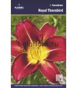 Лилейник Royal Thornbird /1