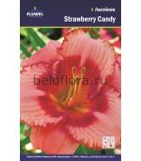 Лилейник Strawberry Candy /1