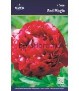 Пион Red Magic /1