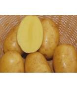 Картофель Вега 1кг