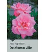 Роза De Montarville 80-100 (непрерыв)