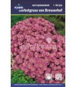 Астра Herbstgruss von Bresserhof куст/2