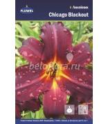 Лилейник Chicago Blackout/1