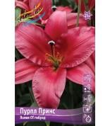 Лилия Purple Prince ОТ-гибрид 12/14 /5
